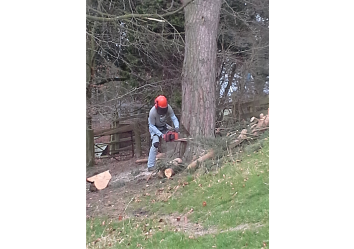 Tree Felling Ossett | Tree Felling Wakefield | Tree Felling Leeds