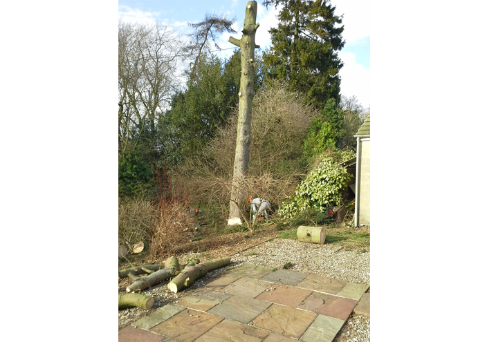 Tree Surgeons Ossett | Tree Surgeons Wakefield | Tree Surgeons Leeds